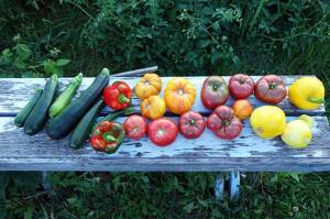 vegetables on bench
