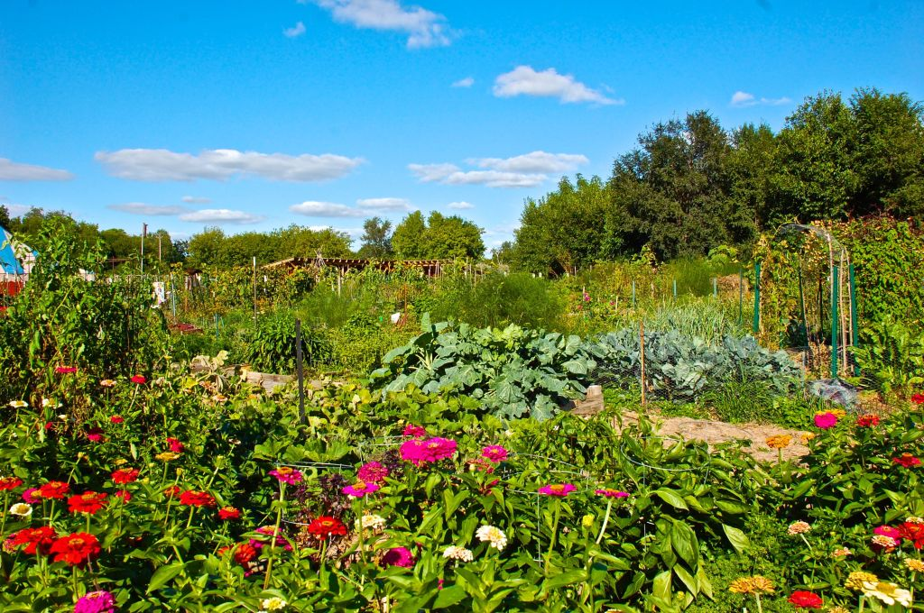 Gardens 2014 zinnias