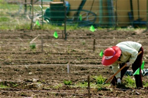 troy-community-gardens-red-hat_0
